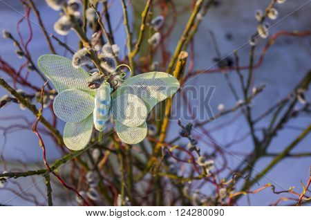 Willow blossom. Butterfly on willow. The snow in spring. The nature of the spring.