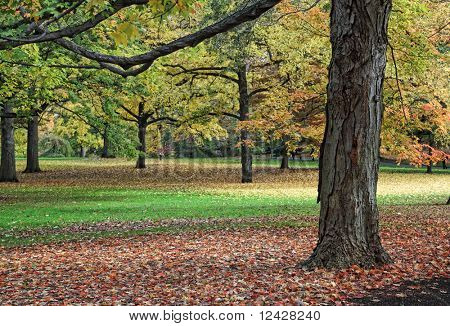 Scenic view of tree trunks with fall foliage and fallen leaves.