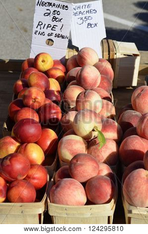 Nectarines and White Peaches displayed and for sale at a local outdoor farmers market on a sunny summer day
