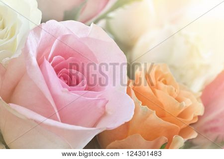 A beautiful bouquet of colorful roses kissed with warm sunlight. ** Note: Soft Focus at 100%, best at smaller sizes