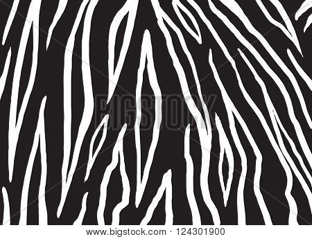 Zebra stripes texture. Vector illustration. Zebra pattern in black and white color. Zebra skin Background Design for Art, Print, Home decor, Fashion, Web site.