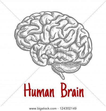 Vintage engraving sketch of human brain with anatomically detailed brainstem and hindbrain. Medicine, science or brainstorm concept