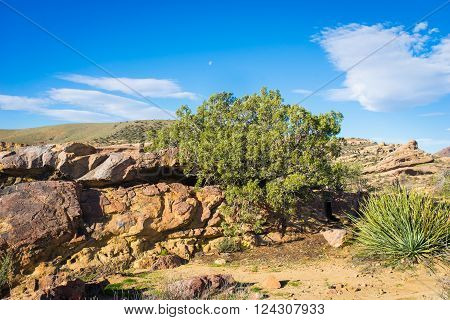 Green bush grows from crack in the boulder in the Mojave desert.
