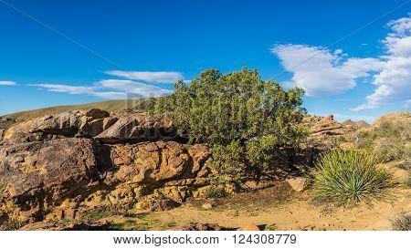 Green bush grows from crack in rock boulder in Mojave desert.