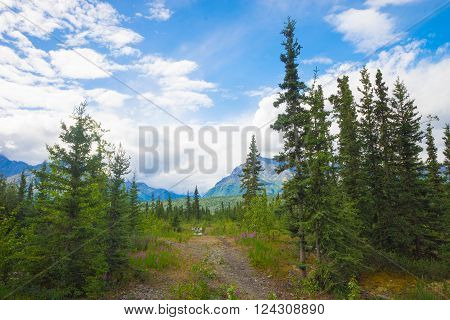 Pine trees along a hiking trail and meadow with mountains in the distance in North America.