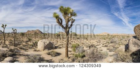 Boulders and joshua trees at the national park in southern California.