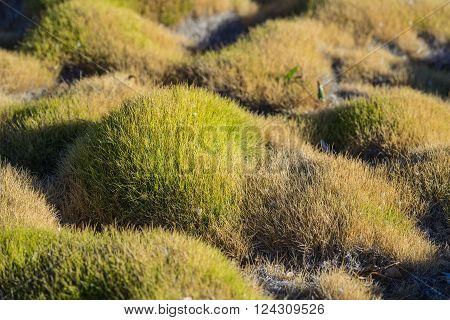 Grass In Oriental Zen Garden