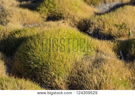 Green Blades Of Garden Grass