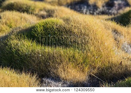 Mound Of Thick Grass