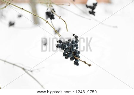 Spurge-flax branch, closeup