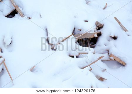 Snow-covered dry lath, closeup