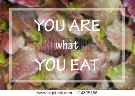 You are what you eat in spirational quote on vegetable background