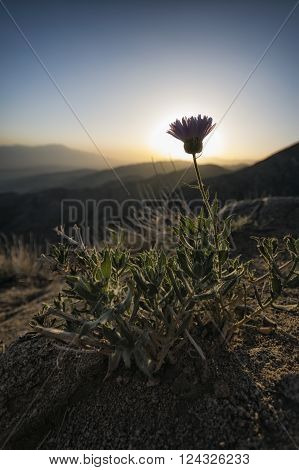 Plant In The Mountains