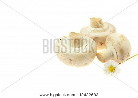 Mushrooms And Radishes Isolated On White