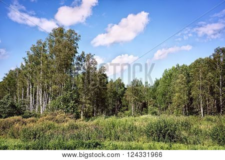summer swampy forest landscape with cloudy sky