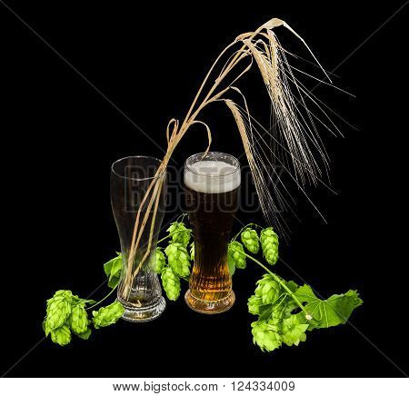 One beer glass with lager beer branch of hops with leaves and cones and several barley spikes in empty glass on a black background