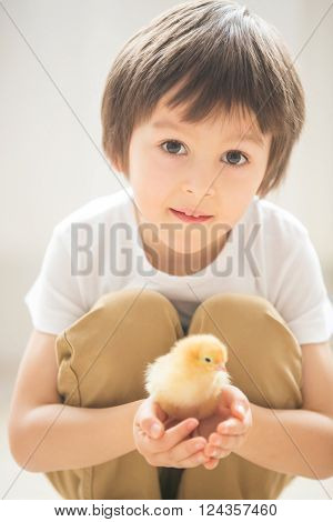 Cute sweet little child, preschcool boy, playing with little chicks at home, baby chicks in child hands
