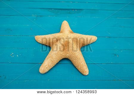 starfish on blue wooden boards close up