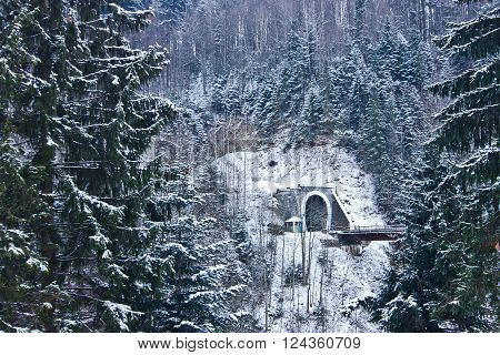 View of tunnel through fir trees in Yaremche