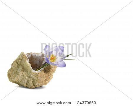 Crocus In Quartz Geode
