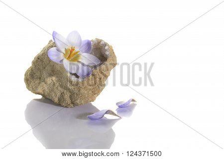 Crocus Flower In Quartz Geode