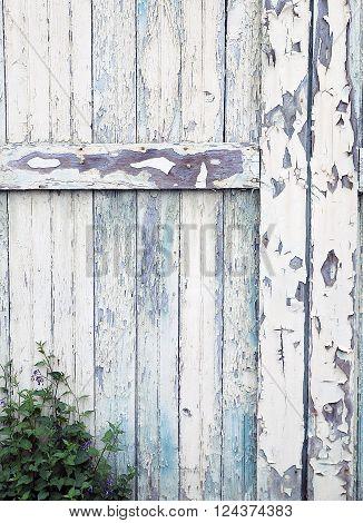 Detail of Old Barn Door With Peeling Paint