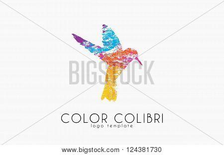 Colibri logo. Color colibri. Bird logo. Creative bird