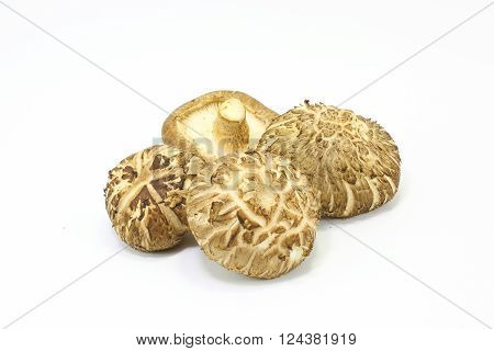 Whole Shiitake mushroom fresh tasty fragrant on white background