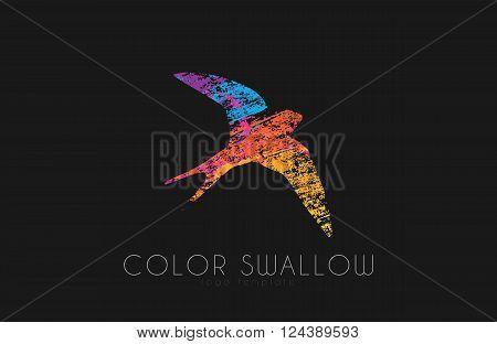 Swallow logo. Color swallow logo design. Bird logo design