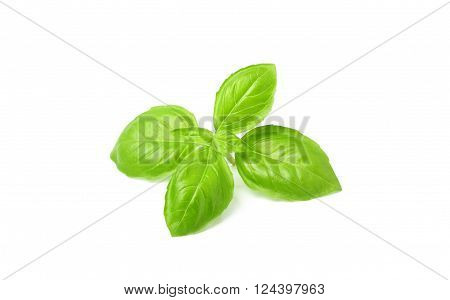 A beautiful sprig of fresh Basil.Isolated on a white background.