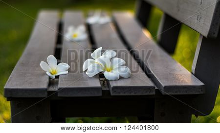 Leelavadee, Plumeria, tropical flower on long bench