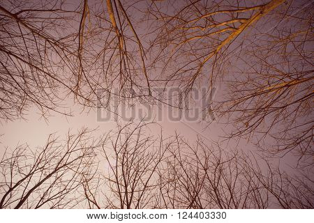 View of the sky through the dry trees