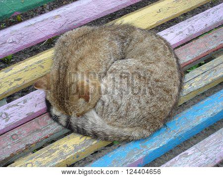 Sleeping homeless cat on old rainbow bench