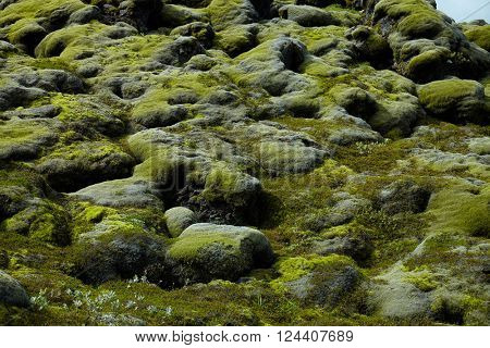 Moss covered rocks on Iceland