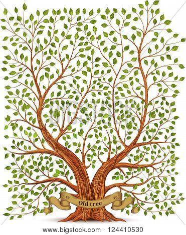 Old vintage tree on white background vector illustration