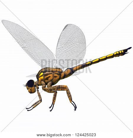 Meganeura Dragonfly Side Profile 3D illustration - Meganeura was an insect dragonfly that lived in the Carboniferous Period of France and England.