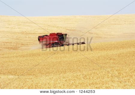 Wheat Harvest 18