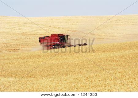 Wheat Harvest 18