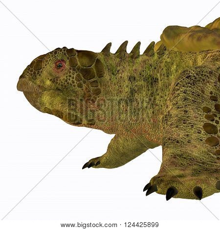 Proganochelys Turtle Head 3D illustration - Proganochelys is the second oldest turtle species discovered and lived in Germany and Thailand in the Triassic Period.