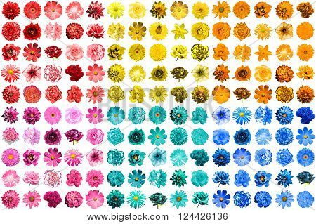 Mega Pack Of 150 In 1 Natural And Surreal Blue, Yellow, Red, Pink, Turquoise And Orange Flowers Isol