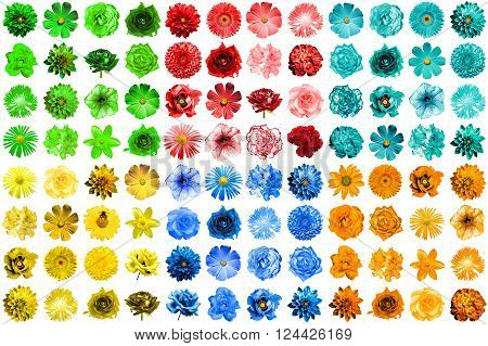 Mega Pack Of 96 In 1 Natural And Surreal Blue, Yellow, Red, Green, Turquoise And Orange Flowers Isol