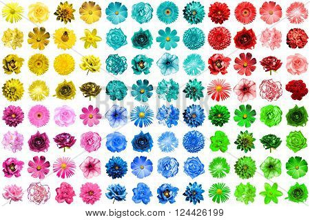 Mega Pack Of 96 In 1 Natural And Surreal Blue, Yellow, Red, Green, Turquoise And Pink Flowers Isolat