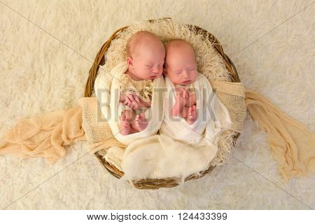 Adorable newborn identical twin baby girls sleeping in a soft basket