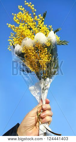 Bouquet of mimosa in hand against the blue spring sky