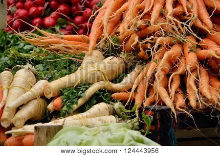 Organic carrots tied in spring time with parsnip and a pile of fresh organic radishes