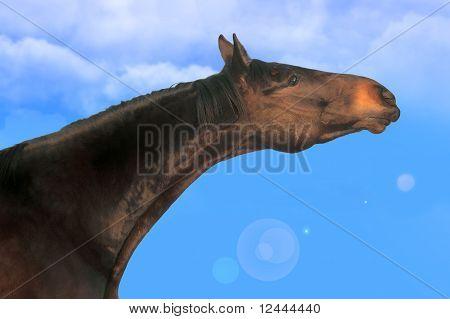 Horse_