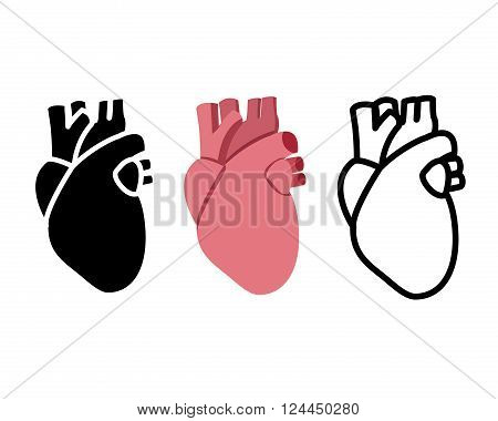 Real human heart in flat style vector object