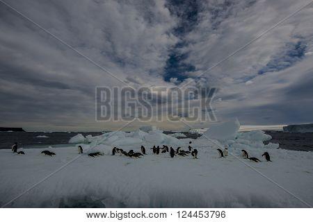 Adelie Penguin on an Iceberg in Antarctica