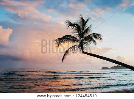 Silhouette of tropic palm on the sunrise