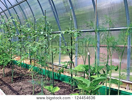 Vegetable greenhouses made of the transparent polycarbonate